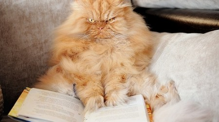 mad-cat-reading-book