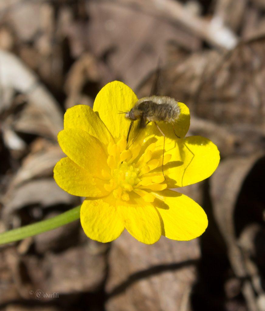 pollinators-1