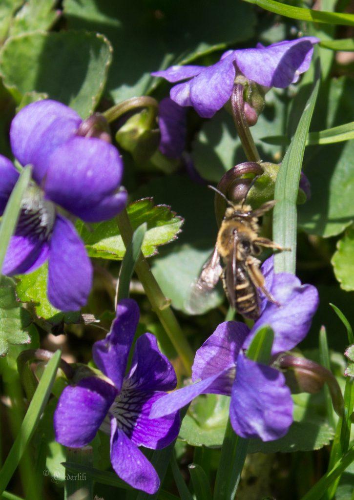 pollinators-6