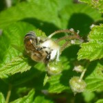 pollinators2-3