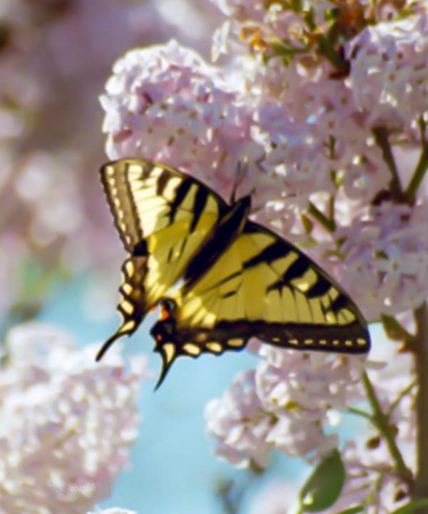 pollinators2-7