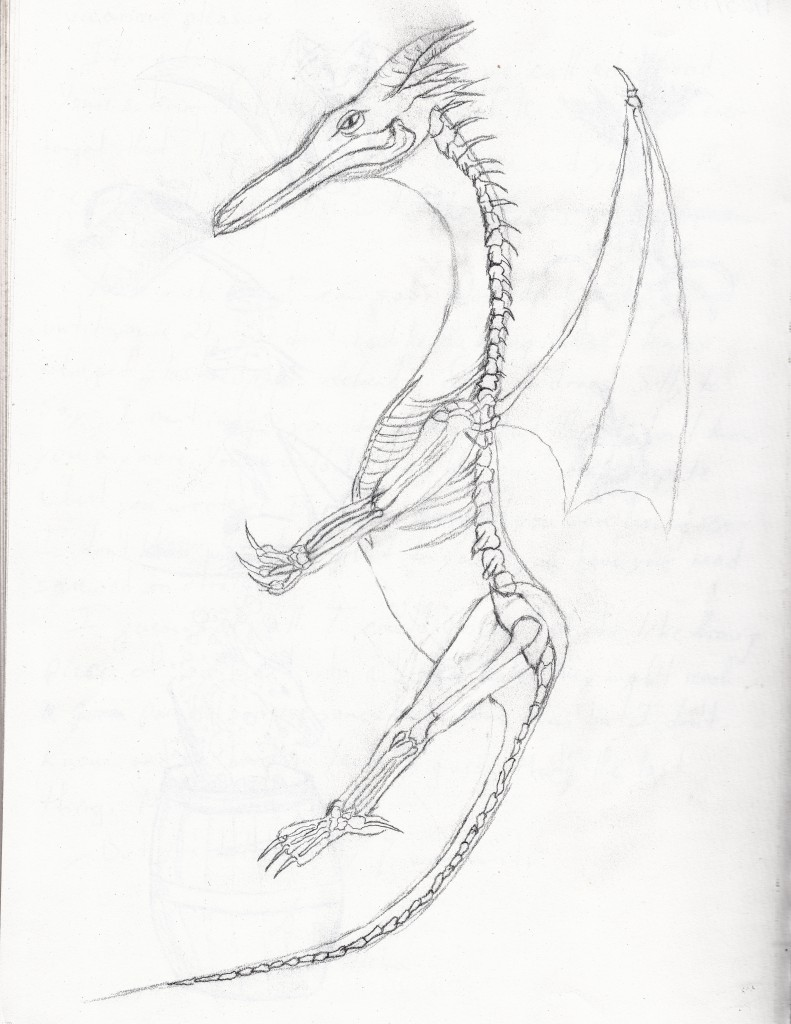 dragon bones, partly based on a cat skeleton in our lab.