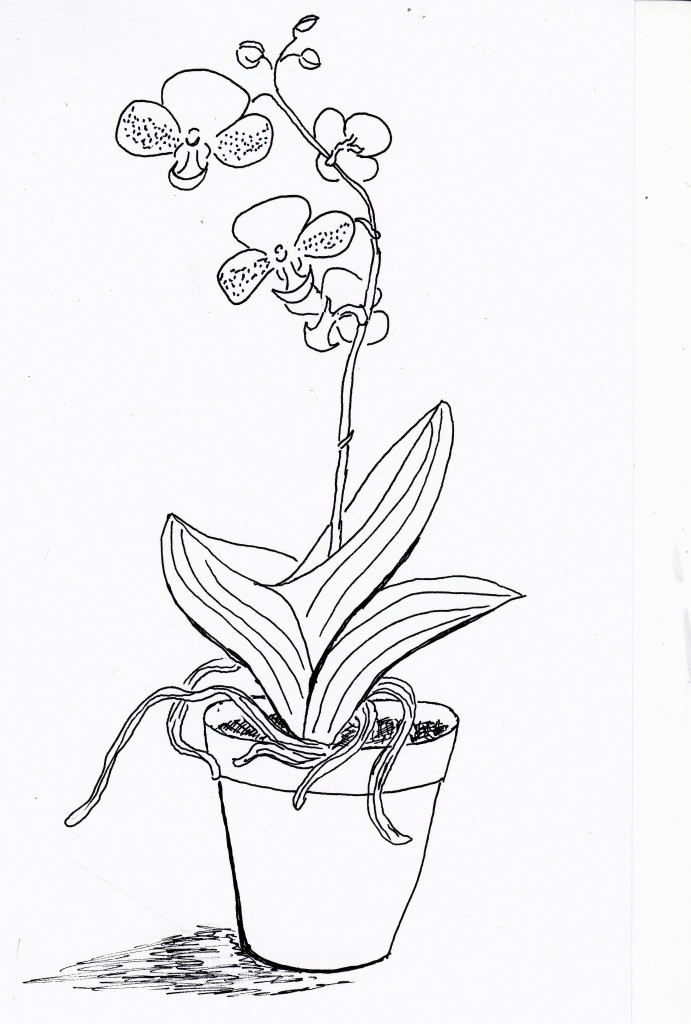 Day 89: Moth Orchid