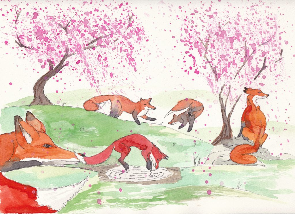 foxes in spring