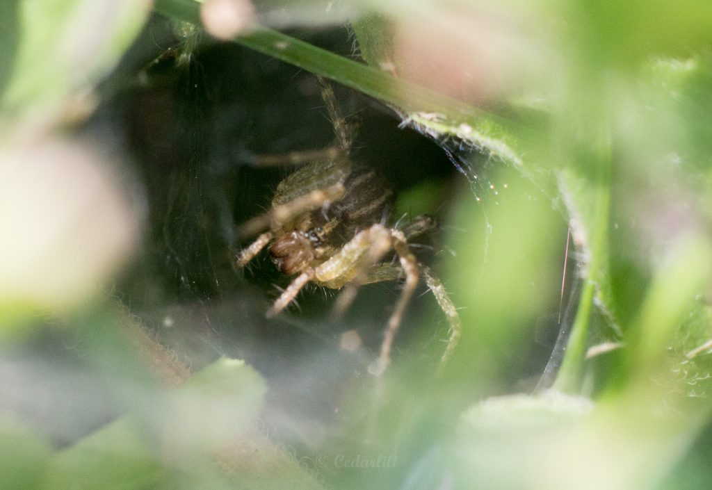 Bug Hunt-10