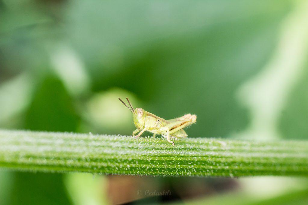 Bug Hunt-11