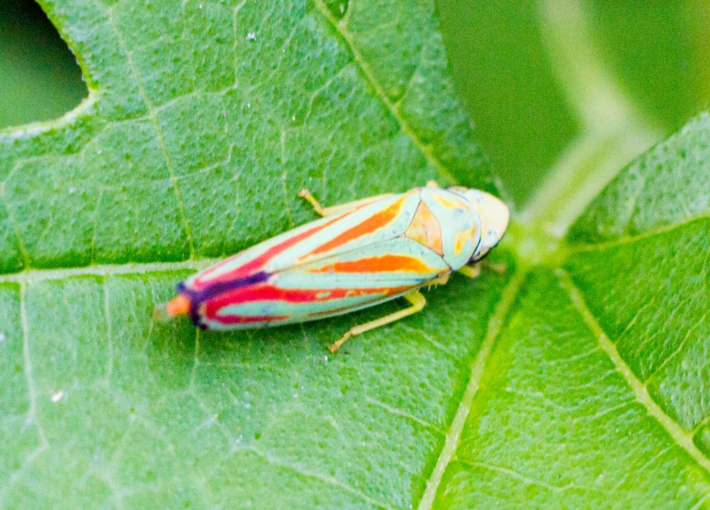 Bug Hunt-17