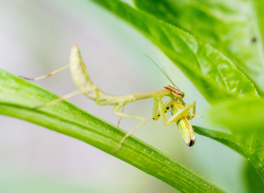 Bug Hunt-22