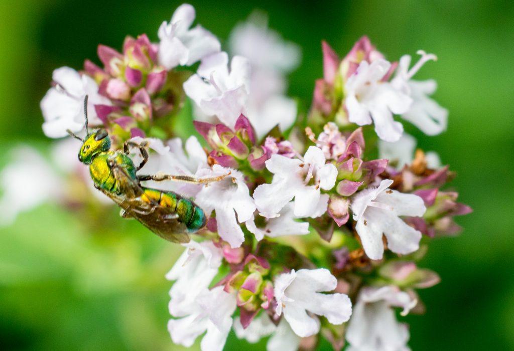Bug Hunt-9